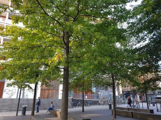 Summer in Dalston Square